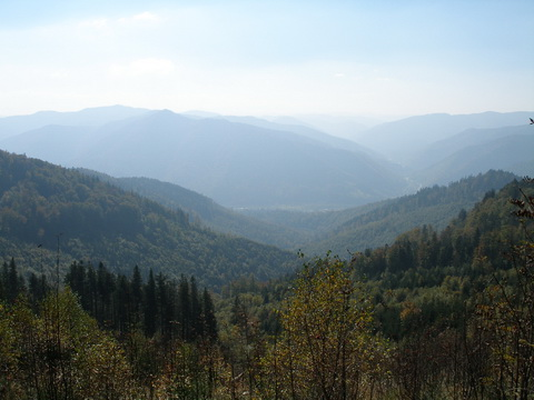 Ліс не рубають, а доглядають, формують та оздоровлюють