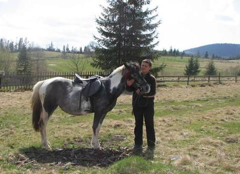 гуцульські коні