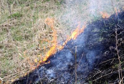 Чи варто палити суху траву?