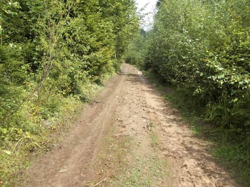 Будівництво лісових доріг