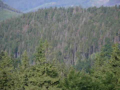 лісогосподарські заходи на 2015 рік