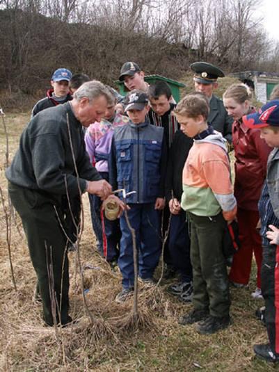 Вчимо правильно прищеплювати дерева