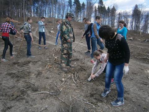Посадка лісових культур в Підгородцівському лісництві