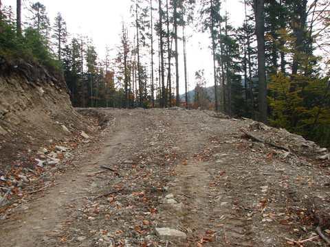 Будівництво нової лісової дороги