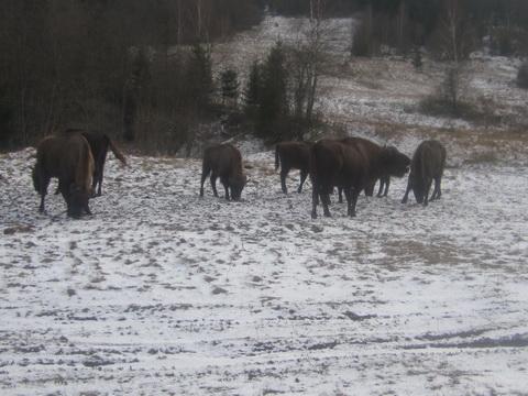 зимовий облік тварин