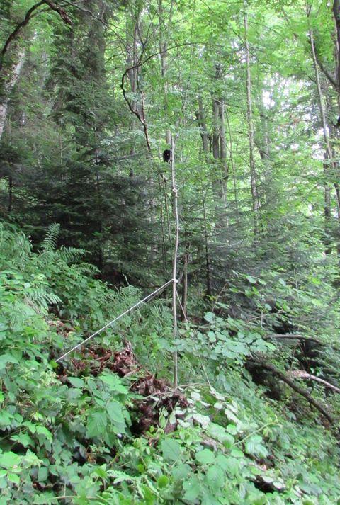 Інвентаризація кажанів на території НПП Сколівські Бескиди