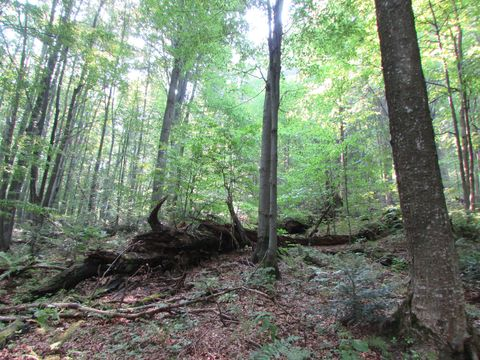 Проведено обстеження старовікових лісів