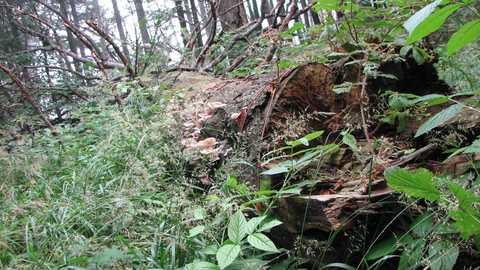 Природоохоронна та рекреаційна діяльність Сколівського лісництва