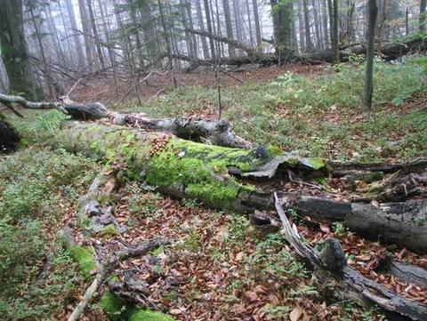 дослідження старовікових лісів та пралісів